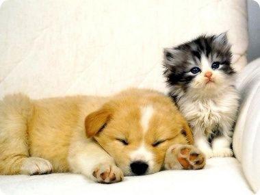 """什么动物最可爱?科学家网上晒照""""寻找最萌动物"""""""