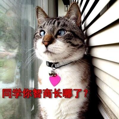 喝醉的猫咪图片可爱