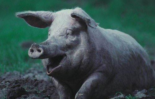 各种动物的萌笑,分分钟打败你哦