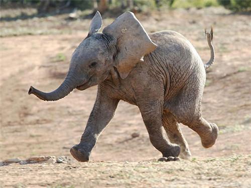 小象动物可爱手机壁纸